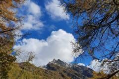 Larici in Valsesia