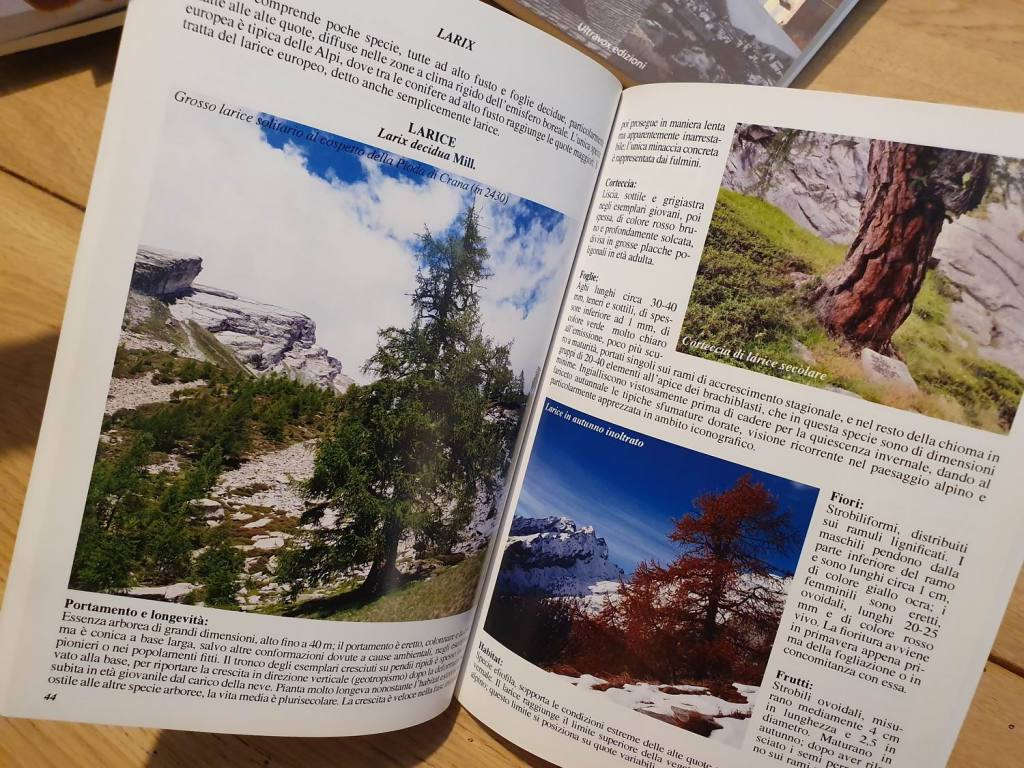 2-Conoscere-gli-alberi-della-Valle-Vigezzo-Paniz-De-Ambrosis-pagina-Larix