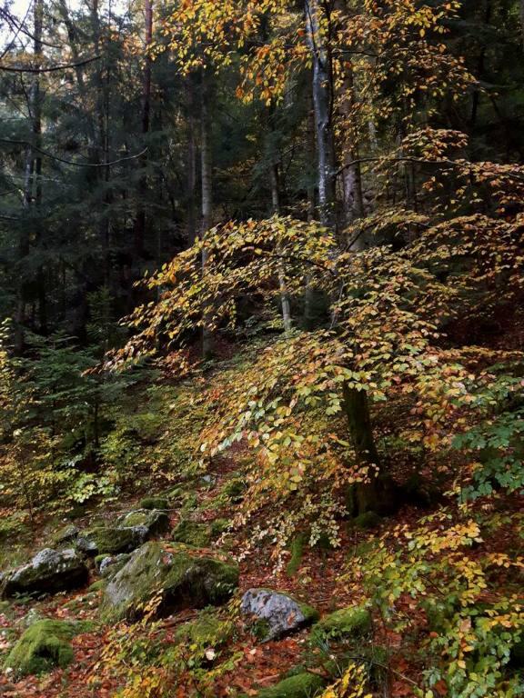 raccolta funghi in Val Vigezzo