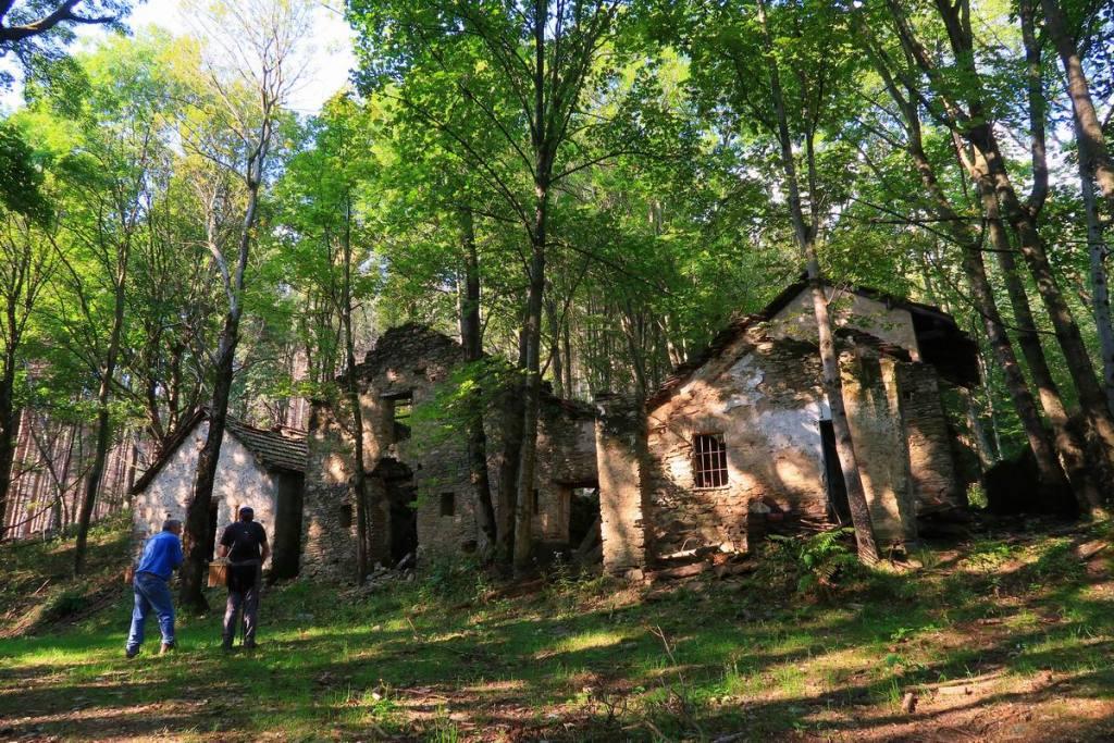 raccolta funghi nei boschi del Mottarone